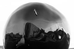 Praying Mantis On Sphere (Duncan Rawlinson - Duncan.co - @thelastminute) Tags: 1aagtznp7xm44webufshyjzqmxm1tl8ytr 5dsr bw backofsnowman canon canoneos5dsr duncanrawlinsonphoto duncanrawlinsonphotography duncanco enamelonbronze garyhume photobyduncanrawlinson roadtrip2016 shapes shotwithcanoneos5dsr sphodromantisviridis wildlife abstract antenna art bandw black blackandwhite bug crane httpduncanco insect isolated mantis nature praying prayingmantis reflection reflections round sculpture shape small sphere white