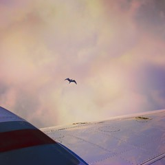 4 (zakchalmers) Tags: canon eos t2i 4 plane wing sky bird fly