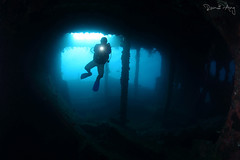 Blue (Randi Ang) Tags: libertywreck shipwreck wreckdive usatliberty tulamben bali indonesia underwater scuba diving dive photography wide angle randi ang canon eos 6d fisheye 15mm randiang