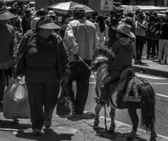 puno boy on donkey (juiceSoup) Tags: puno bolivia lake titicaca