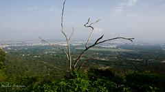 Mysore from Chamundi Hills (Narottam Tirthalankar) Tags: city hills mysore chamundi