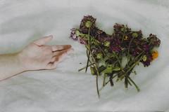 9/365 (Emily Caitlin.) Tags: flowers selfportrait girl canon dead hand arm experiment conceptual simple 50mmf14 252 sortof lettinggo 52weeks 365days 9365 t2i filmtexture