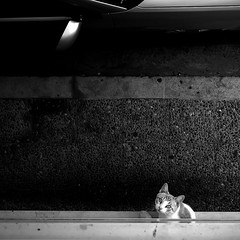 (ToniVC) Tags: street car cat girona holidaysvacanzeurlaub