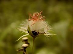 despir (mayarvore) Tags: flower nature forest olhar exploring natureza flor dream rosa experience jardim caminhada sonho dentro encanto expansion força sentir observar despir sensível