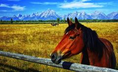 Pastoral Pasture - 2015 (Jeff Clow) Tags: travel horse usa tourism wyoming tetons grandtetonnationalpark jacksonholewyoming