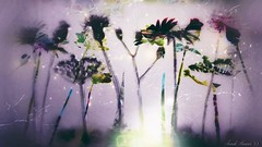 'Misty Gardens' #PhotoManipulated #DigitalIllustration #DigitalArt #surreal #surrealism #AbstractSurreal #flowers #dark #beauty #nature #UsagigunnDesignInx #SarahMaurer #SarahArt (Usagigunn79) Tags: flowers nature beauty dark surrealism digitalart surreal photomanipulated digitalillustration sarahart abstractsurreal sarahmaurer usagigunndesigninx