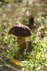 Wandeling Kootwijk (kath & theo) Tags: mushroom herfst veluwe paddestoel paddo kootwijkerzand kootwijk
