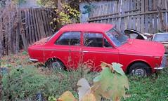 1969 Toyota Corolla vs Mother Nature (tonywild241) Tags: autumn canada classic abandoned vintage britishcolumbia fallcolors neglected rusty crusty junker mostviewed vernonbc