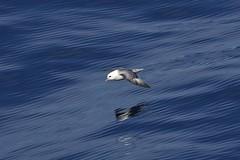 _JPN8143 (TC Yuen) Tags: glacier arctic greenland whales iceberg crusing floatingice polarregion greenlandeast