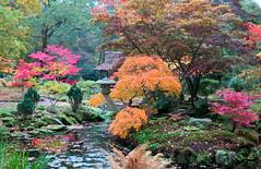 The Japanese garden of The Hague (Frans Schmit) Tags: autumn trees japanesegarden denhaag thehague clingendael japansetuin fransschmit