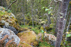 Rocks on the route (TimoOK) Tags: suomi woods hiking path route mets kuni vaellus polku reitti
