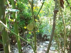 bukalemun (anneler) Tags: hayvan srngen