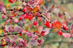 (ccilearmand) Tags: travel red paris france tree green nature garden photography nikon versailles promenade graines d3100