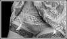 ZZZZP - BD (jeepye333) Tags: stockings panties lace panty lingerie slip stocking bas nylon slips culotte garters sottoveste jupon