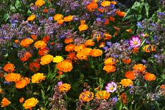 hazebrouck-12 (xtrice) Tags: jardin hazebrouck jardinsfamiliaux fleurs rawtherapee gimp ubuntu france nord