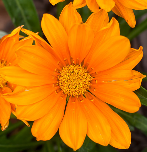 Big n Orange...