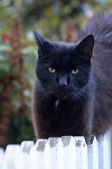 Ladram Bay (Ulli J.) Tags: grosbritannien storbritannien greatbritain grandebretagne grootbrittanni royaumeuni verenigdkoninkrijk vereinigtesknigreich unitedkingdom uk england engeland southwestengland devon otterton ladrambay hauskatze katze chat cat kat