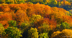 Colorful trees (z.dorighi) Tags: autumn fall trees color colorful beautiful forest woods golden yellow nature flora