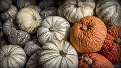 Ready for fall (Jodi Newell) Tags: autumn california canon coronadelmar fall jodinewell jodisjourneys jodisjourneysphotosgmailcom newportbeach orange pumpkins rogersgardens striped