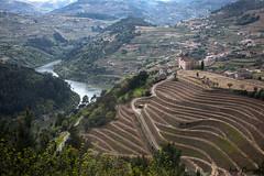 Douro valley (JOAO DE BARROS) Tags: douro river portugal joo barros landscape vineyards