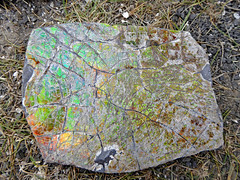 Southern AB Field Trip D2-097 - Korilite Ammolite Quarry (Oct-05-2016) (MistyTree Adventures) Tags: canada alberta panasoniclumix southernalberta outdoor koriliteamolitequarry gemstone ammolite organicgemstone