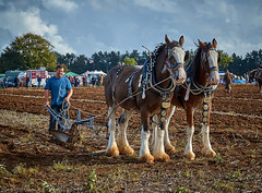 DSC05771 (Andy Oldster) Tags: eashing godalming farm plough ploughing heavyhorses shire sony alpha a65 slt