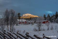 DSC02582 (norwegen-fotografie.de) Tags: norw norwegen norway norge femunden femundsmarka villmark hedmark see wildnis wald landschaft