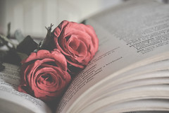 Roses (Ayeshadows) Tags: roses love well soft care life test blues dullness haze mist book sonstestpreparation