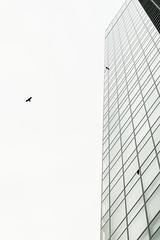 A Bird in the Sky (Shinichiro Hamazaki) Tags: newoman bird building sky