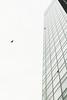A Bird in the Sky (Shinichiro Hamazaki) Tags: newoman bird building sky 鳥 ビル 高層ビル ビルディング ニューマン