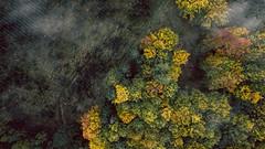 Deep in the woods (mbernholdt) Tags: 500px aerial aerials autumn dji drone photography droneoftheday fruens plantage aerialphotography contentthatflies denmark djiworld djicreator djidrone djiglobal djiphantom dronebois dronebook droneheroes dronephotography dronephotos fromwhereidrone gameofdrones iamdji instagood landscapephotography phantom3 skytango thegreatoutdoors