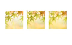 autumn's three....... (Brigitte Lorenz) Tags: autumn soft pastel nature maple light leaves