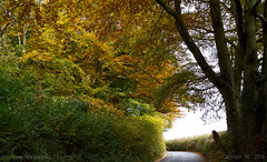 Autumn way (Ollie_57.. on/off) Tags: landscape leaves trees lane road colourful autumn flora rural countryside canon ef24105mm 7d oct 2016 bishopsteignton devon england westcountry uk affinityphoto ollie57 saariysqualitypictures