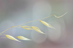 Frágil /fragile (hequebaeza) Tags: simple sencillo simplicity minimalista minimalistic naturaleza nature vegetación vegetation 3570mm nikon d5100 nikond5100 hequebaeza