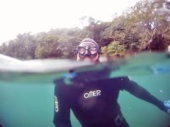 GOPR5940 (ambrogi_taubate) Tags: naturezaselvagem marinha mergulhando ubatuba sp brasil naturezamarinha fantstica apneia 10m setembro primavera 2016