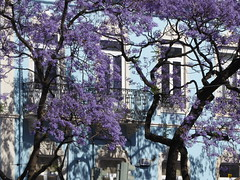 Lisbon, Portugal (ashabot) Tags: blue purple blossoms trees beauty nature lisbon portugal shadows walls tree blossom afternoon