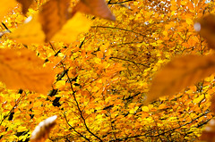 20161030-WOL_7741.jpg (viennalinux) Tags: spaziergang nebel herbst nature tauern fog natur ossiach ossiacher