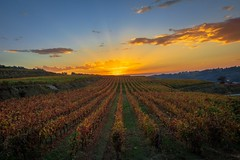 Vineyard sunset (Artur Tomaz Photography) Tags: falll agriculture rural leaf sky vineyard yellow autumn cloud colors grapes grass layers nature orange penalvacastelo pov rays sunset sunshine wine