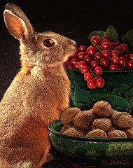 Bunny&Berries (clabudak) Tags: rabbit bunny stilllife berries currants walnuts closeup bowls green ruby10 ruby15 ruby20