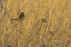 Early Morning at the Wetlands (pdecell) Tags: bakerwetlands fall birds