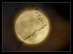 Vollmond (karin_b1966) Tags: mond moon nacht night flug flight vgel birds collage 2016 vollmond kraniche yourbestoftoday