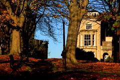 A Beautiful Day ........ (acwills2014) Tags: bristo clifton november leaves fall autumn bluesky sky blue light shade strongshadows