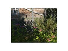 Aarhus, Denmark (September 2016) (csinnbeck) Tags: aarhus denmark iphone 2016 fence flowers green autumn summer 8000 dk