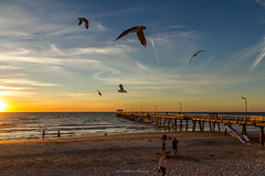Goldern Hour Henley Beach (johnwilliamson4) Tags: beach goldernhour henleybeach jetty people seagulls southauatralia sunset water southaustralia australia