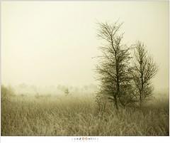 Bevroren mistige wereld (nandOOnline) Tags: morning nature dauw landscape koud december landschap natuur ochtend mist rijp nevel strabrecht vorst sunrise cold fog strabrechtseheide zonsopkomst frost mierlo nbrabant nederland