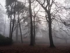 trees in the mist (neil.bulman) Tags: countryside longshawestate peakdistrict nature nationalpark derbyshire longshaw fog trees nationaltrust derbyshiredalesdistrict england unitedkingdom gb