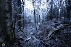 Following water_ (stram36) Tags: nature landscape forest deep darkness forêt paysage mysterious mist cold morning winter hiver chamonix canon 100d eos tokina 1116mm