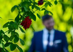 ...and the groom (Theocharis Kalamaras) Tags: blue wedding red flower green rose groom hellas marriage greece