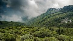Garden Tea (Fernando Cmara) Tags: blue sunset sky india green field clouds garden landscape nikon asia tea gray darjeeling ecovillage d7000 flickrbronzetrophygroup