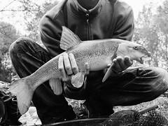 20150919-GR010237-Edit (fleetingphotons) Tags: ricohgr bw wasingestate fishing fish barbel 4lb me kennet warrenbeat